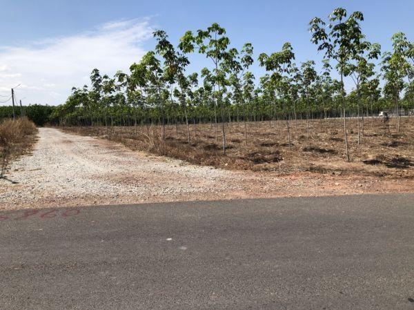 Bán Đất Xây Nhà Vườn Chơn Thành, Bình Phước, Diện Tích 1033M2, Giá 680 Triệu - 521902