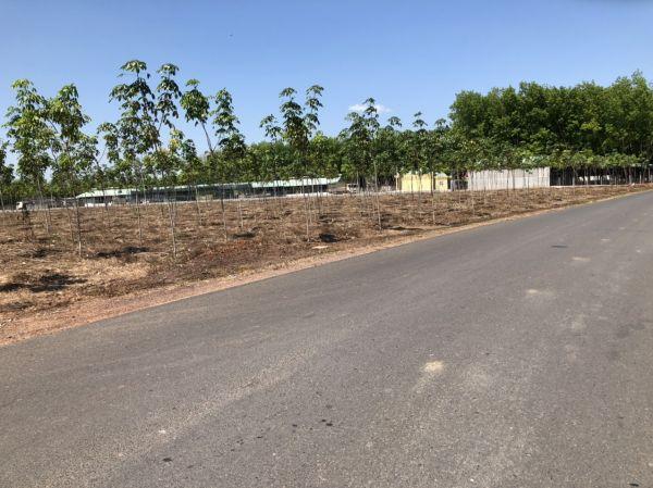 Bán Đất Xây Nhà Vườn Chơn Thành, Bình Phước, Diện Tích 1033M2, Giá 680 Triệu - 521908