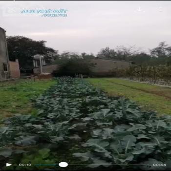 Đất Nghi Ân Đẹp Cho Nhà Đầu Tư Và Những Người Thích Ở Nhà Vườn Cảnh Quê Yên Bình - 543649