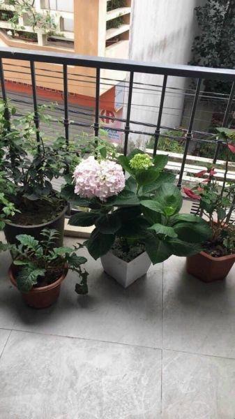 Bán Nhà Đường Nguyễn Lương Bằng, Hd 55M2, Mt 4M, Ngõ Ô Tô, 2 Tỷ 250 Triệu - 550681