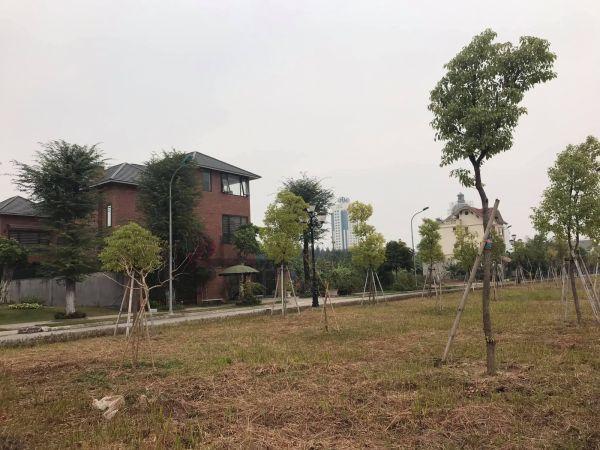 Bán Đất Biệt Thự Plaza, Phường Tứ Minh, 150M2, Mt 7.5M, Giá Tốt, Vị Trí Đẹp. - 551182
