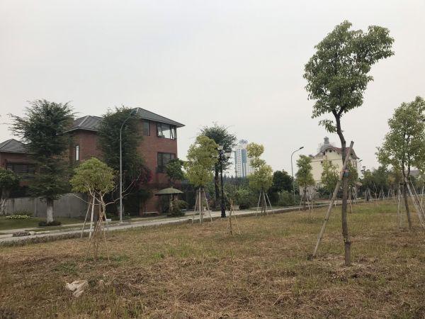 Bán Biệt Thự Plaza, Tứ Minh, Tp Hd, 205.5M2, Lô Góc Đường 39M, Giá Tốt, Cực Đẹp - 553180
