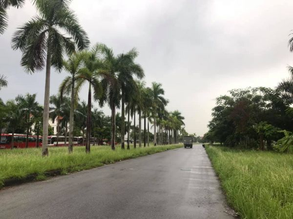 Bán Đất Biệt Thự Đường Đôi Nguyễn Đình Bể, Kđt An Phú, Tp Hd, 250M2, Mt 10M, Đường 75M - 569968